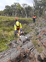 Making the Cut: Fee-free TAFE NSW Primary Industries Centre Chainsaw Course Helping Locals Stay Safe
