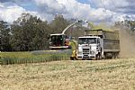 Silage Secrets Unearthed: Farmer Interest Prompts Webinar Series
