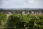 views over the 15 acres of vineyards and olives